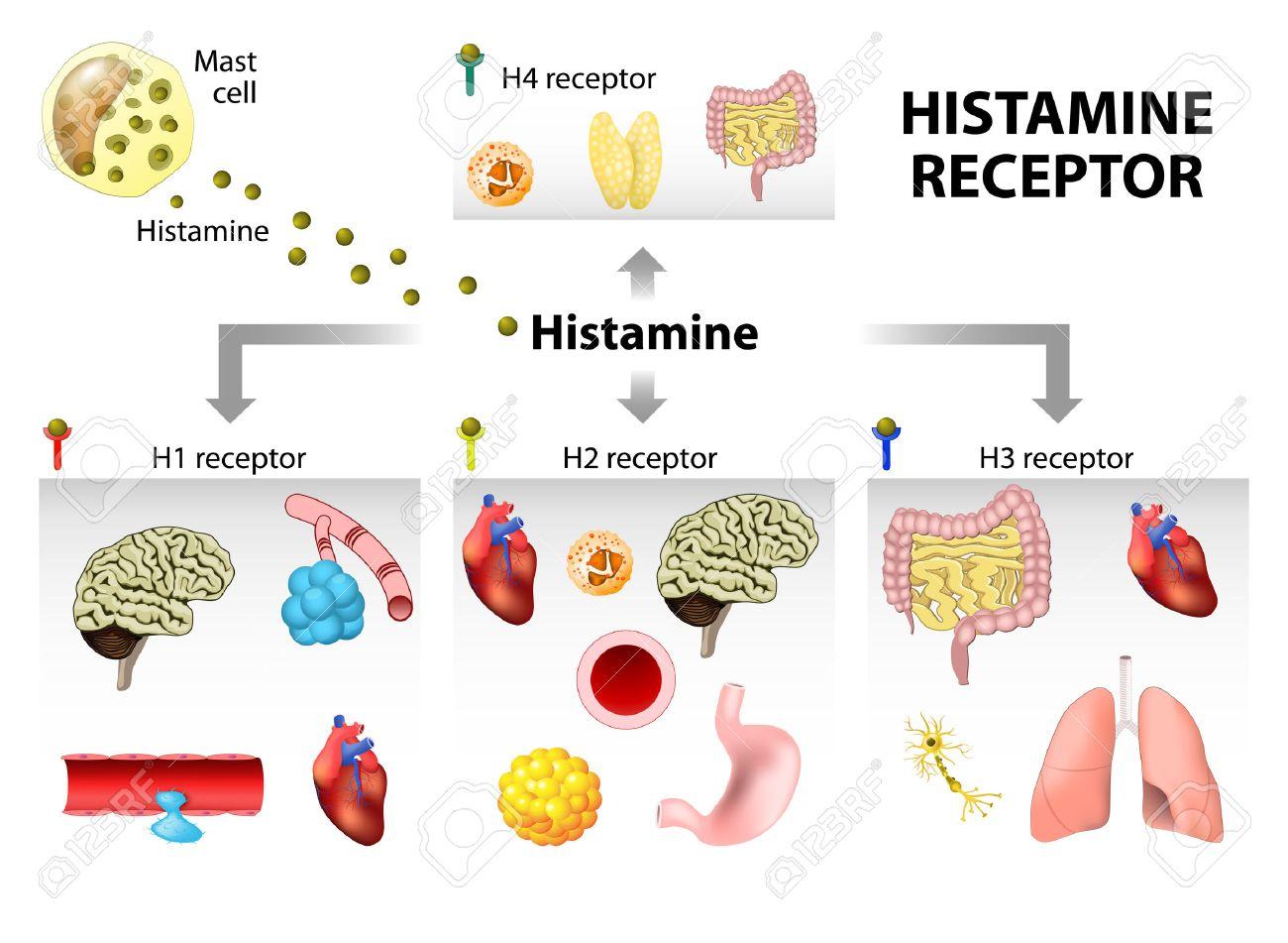 Histamine receptoren