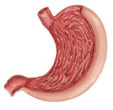 Maagzuurtekort zorgt voor voedselintoleranties