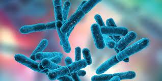Produceert Lactobacillus Casei histamine of niet?